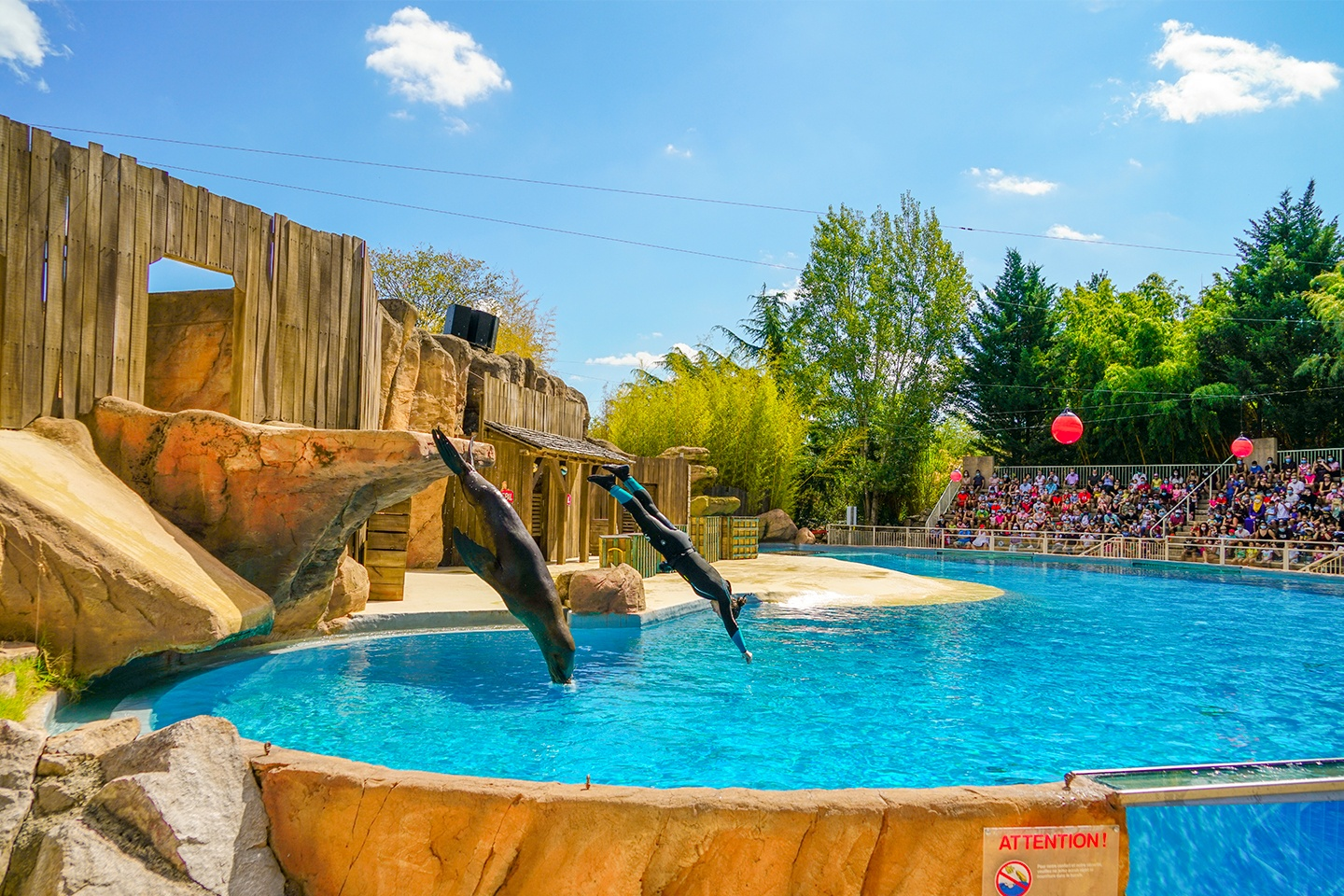 piscines-collectives-zoo